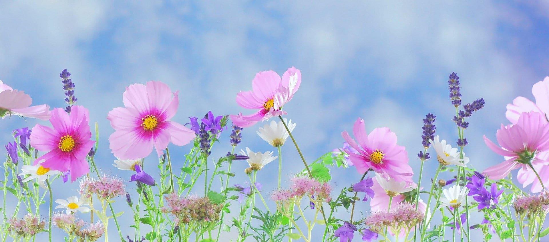 A Terapia Floral no equilíbrio emocional